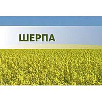 Озимий ріпак Шерпа (Lembke) - 1 п.о.