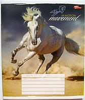 Тетрадь цветная 36 листов, клетка «Лошади»