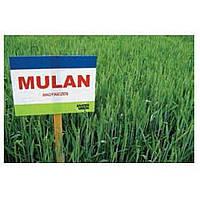 Пшеница озимая Мулан (Nordsaat Saatzucht GmbH)