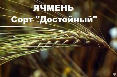 Семена озимого ячменя Достойный