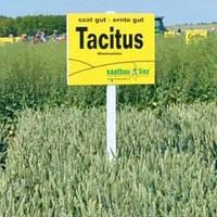 Пшеница озимая Тацитус 1 репродукция  Saatbau