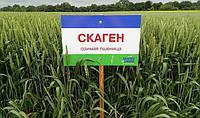 Пшеница озимая Скаген (W. von Borries-Eckendorf GmbH & Co. KG)