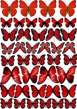 Вафельная картинка Бабочки 6