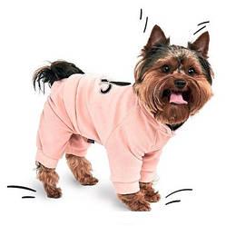 Весенне-осенняя одежда для собак