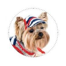 Pet Fashion Кепка Прибой S