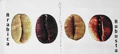 Арабика и робуста: выясняем, в чем разница