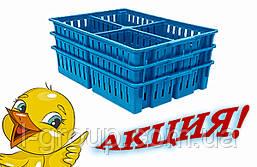 Ящик для перевозки суточных цыплят на 4 отделения