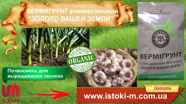 грунт для чеснока_органическое земледелие_чеснок выращивание_посадка зимнего чеснока_удобрение органическое