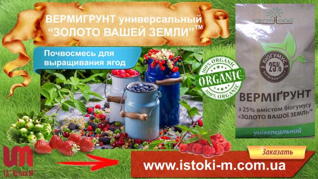 грунт для клубники_почвосмесь для клубники_органическое выращивание клубники_органическое земледелие_удобрение органическое для подкормки клубники