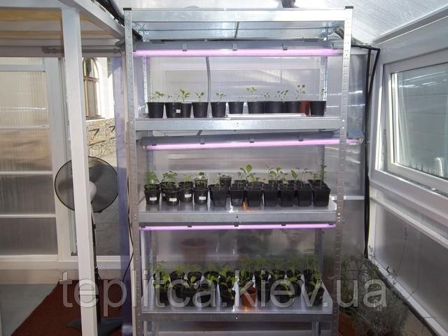 Особенности выращивания рассады цветной капусты