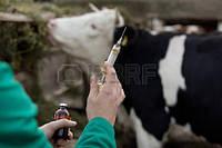 Ветпрепараты для сельхоз животных