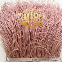 Перья страуса на ленте Цвет Powder  Цена за 0.5м