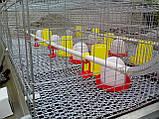 Клетка для 240 бройлеров, фото 7