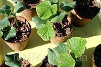 Выращивание рассады кабачка, патиссона и тыквы, репчатого лука и лука-порея, сельдерея