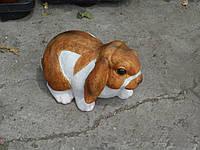 Кролик декоративный маленький