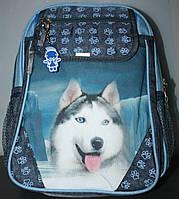 Школьный рюкзак Bagland Хаски