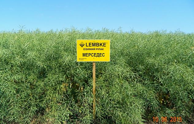 Семена озимого рапса Мерседес (Lembke)