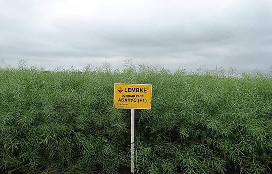 Насіння Ріпак озимий Абакус НВЦ Лембке / NPZ Lembke Німеччина, Середньоранній, для екстремально холодних регіонів, фото 2