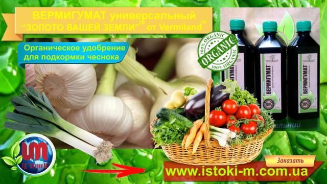 органическое земледелие_органическое выращивание чеснока_удобрение жидкое органическое для подкормки чеснока_чеснок органическое выращивание