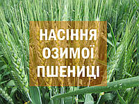 Cемена озимой пшеницы Saaten-Union Мулан
