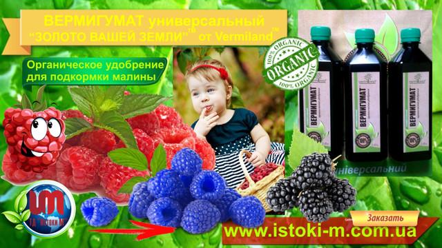 удобрение для подкормки малины_органическое удобрение для малины_органитческое выращивание малины_органическое земледелие_удобрение органиченское