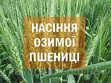 Семена озимой пшеницы КУБУС - KWS SAAT AG