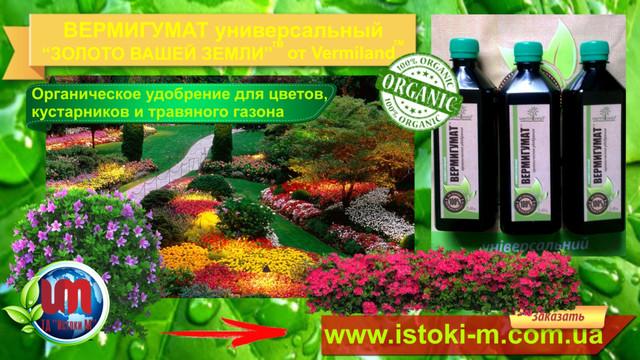 органичкское жидкое удобрение для травяного газона_удобрение для травяного газона_органическое удобрение для газона_органическое удобрение для подкормки винограда_жидкое органическое удобрение для подкормки винограда_удобрение для подкормки винограда_удобрение для подкормки чеснока_органическое удобрение для подкормки чеснока_выращивание чеснока_подкормка чеснока_органические удобрения_внесение удобрение_внесение органических удобрений_органические удобрения купить_ жидкие органические удобрения_ виды органических удобрений_ характеристика органических удобрений_ применение органических удобрений_ универсальное органическое удобрение_ органические удобрения их виды и характеристика_ органические удобрения растений_ органические удобрения для огорода_ использование органических удобрений_ органические удобрения отзывы_ подкормка органическими удобрениями_ лучшее органическое удобрение_ органические удобрения для рассады_ внесение жидких органических удобрений_ удобрения органические цена_ купить удобрение_ растение удобрение_ удобрение биогумус_ удобрение цена_ подкормка органическими удобрениями_подкормка огурцов органическими удобрениями_ подкормка рассады органическими удобрениями_ подкормка чеснока органическими удобрениями_ подкормка картофеля органическими удобрениями_ подкормка крыжовника весной органическими удобрениями