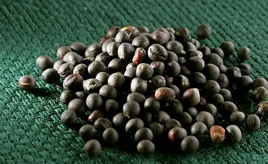 Що впливає на якість насіння?