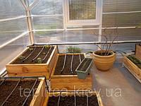 Особливості вирощування розсади пізньої капусти