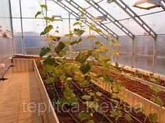 Выращивание огурца под пленочными укрытиями