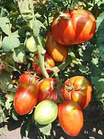 Выращивание томата. Тепличные сорта томата