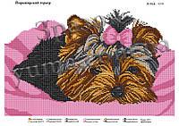 Схема для вышивки бисером Йоркширский терьер
