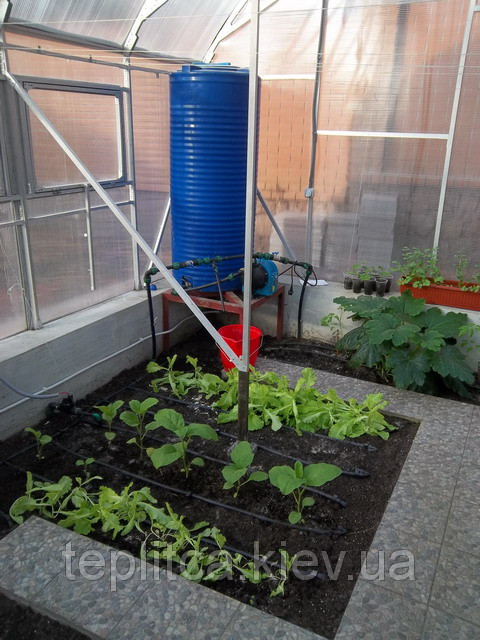 Особенности выращивания в теплицах баклажана и перца