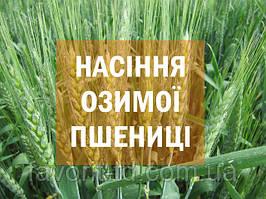 """Насіння високоврожайних сортів озимої пшениці від АК """"Фаворит"""""""