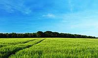 Как получить высокий урожай без использования СЗР и удобрений?