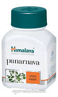 Пунрнава 60 кап (лечение инфекций)Punrnava Himalaya