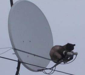 Установка антенны на 3 спутника