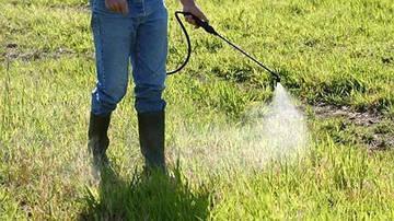 Как применять гербициды сплошного действия(глифосаты)