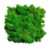 Зелёная трава. Скандинавский Мох Ягегль Стабилизированный 0,500 kg