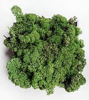 Темно-зеленый. Скандинавский Мох Ягегль Стабилизированный 0,500 kg