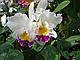 """Набор силиконовых вайнеров """"Орхидея Каттлея"""", фото 6"""
