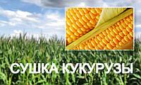 Сушка кукурузы, рапса