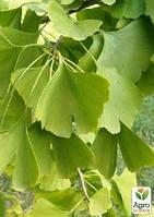 Гинкго билоба, лист 50г