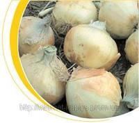 Семена лука озимого Вольф F1 250 000 сем. Никерсон-Цваан