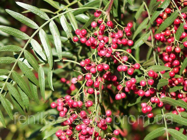 Перец Розовый или Перуанский семена