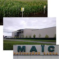 Семена кукурузы гибрид НОВЫЙ (НОВИЙ) ФАО 330 , фото 1