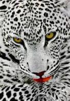Ковёр Kolibri леопард в серых тонах