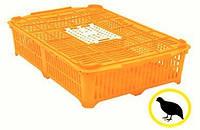 Ящик для перевозки перепелов 670x450x150 мм