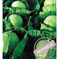 Seminis Гермес F1 (Hermes) семена капусты белокочанной Seminis, оригинальная упаковка (2500 семян)