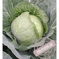 Seminis Зенит F1 (Zennith) семена капусты белокочанной Seminis, оригинальная упаковка (2500 семян)